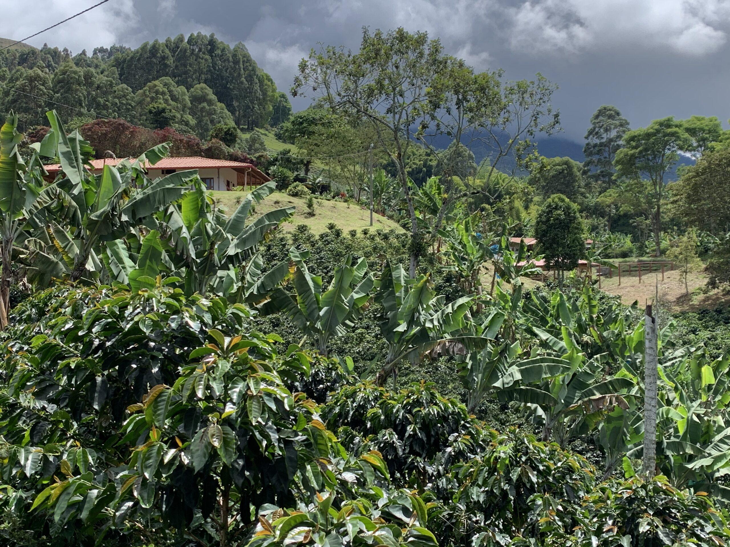 The coffee farm at Finca Mariposa