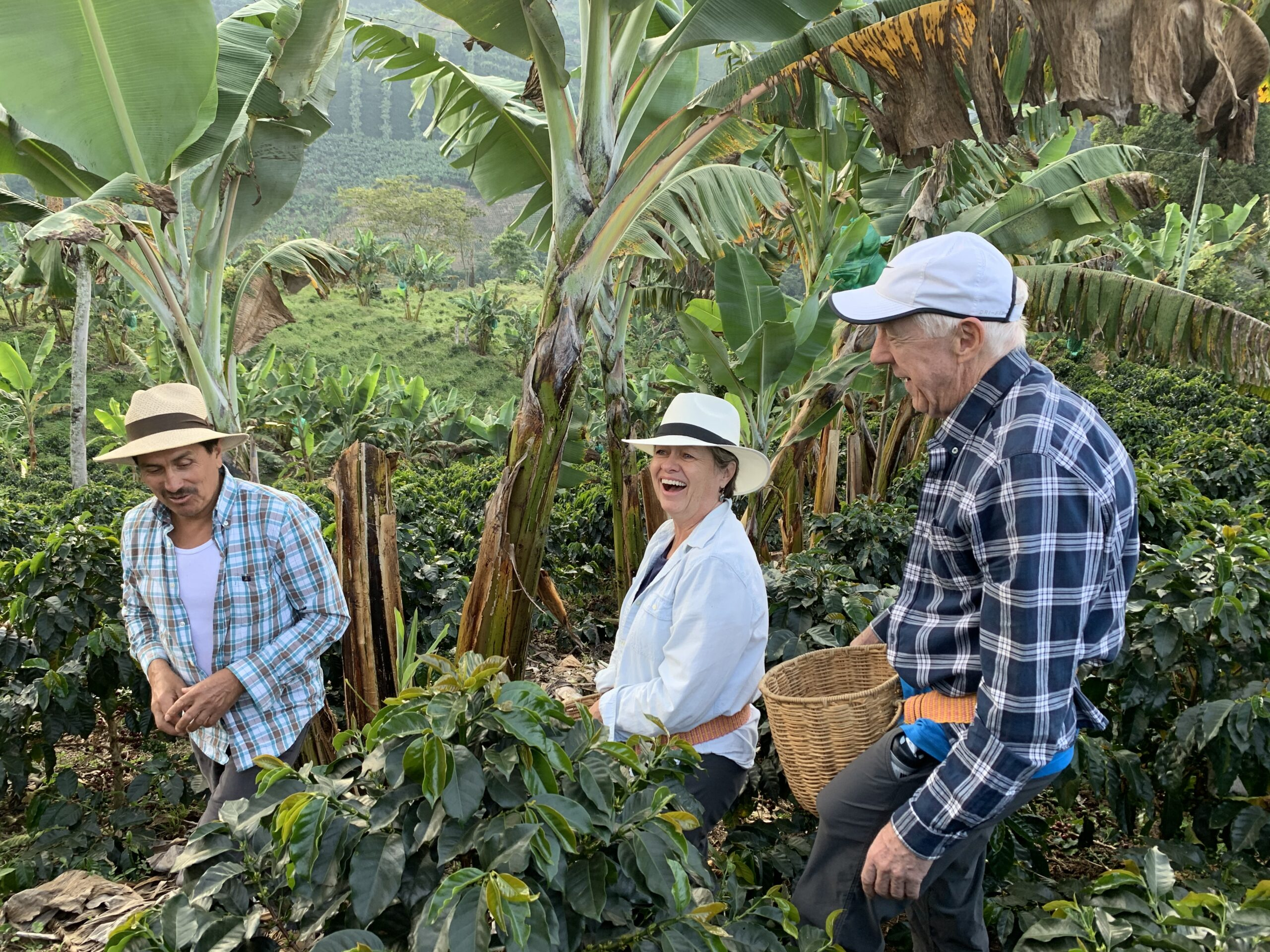 Guests of Finca Mariposa picking coffee cherries on the farm