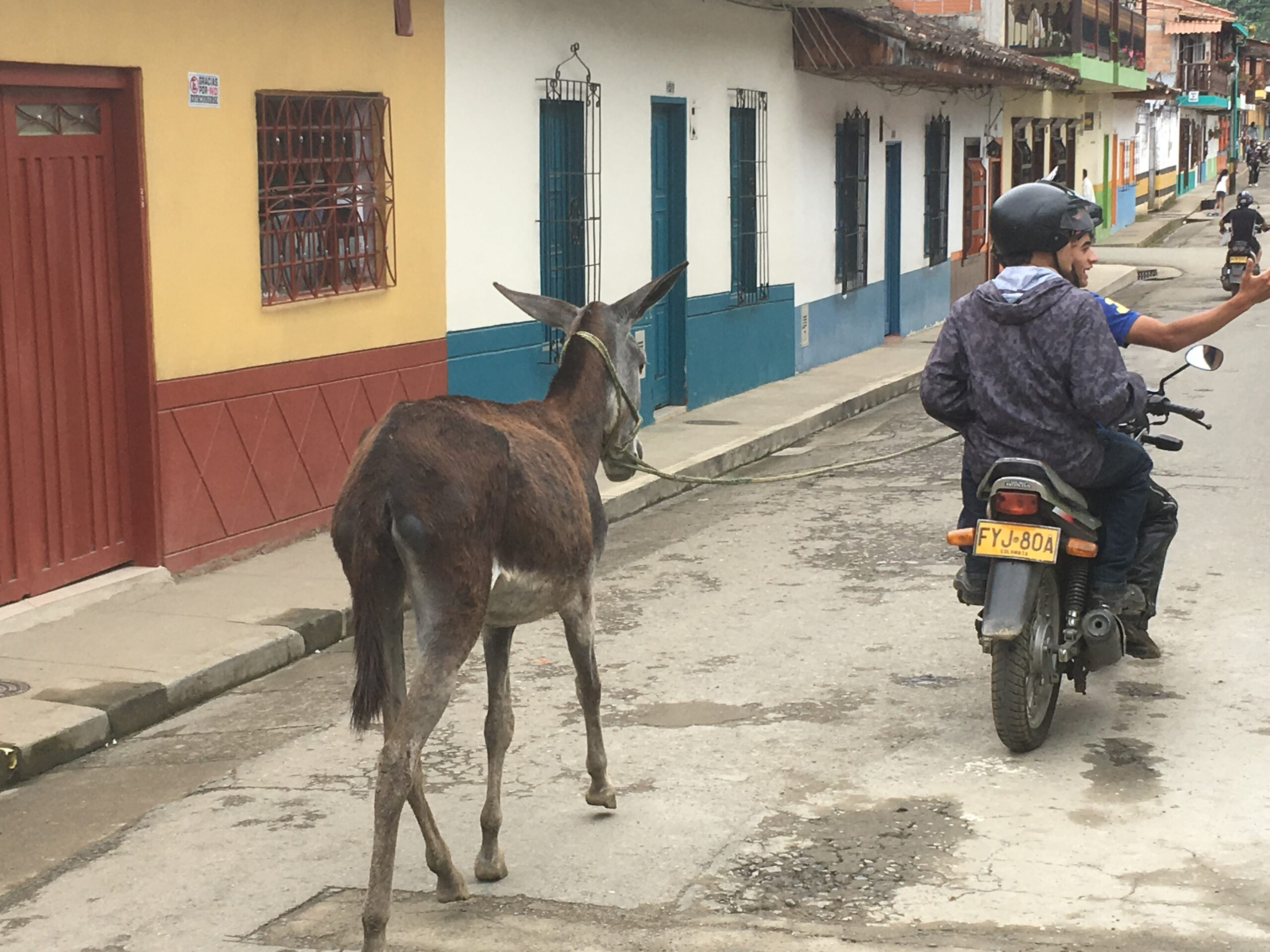 horses, donkeys, motorbikes - all kinds of transport in the town of Jardin