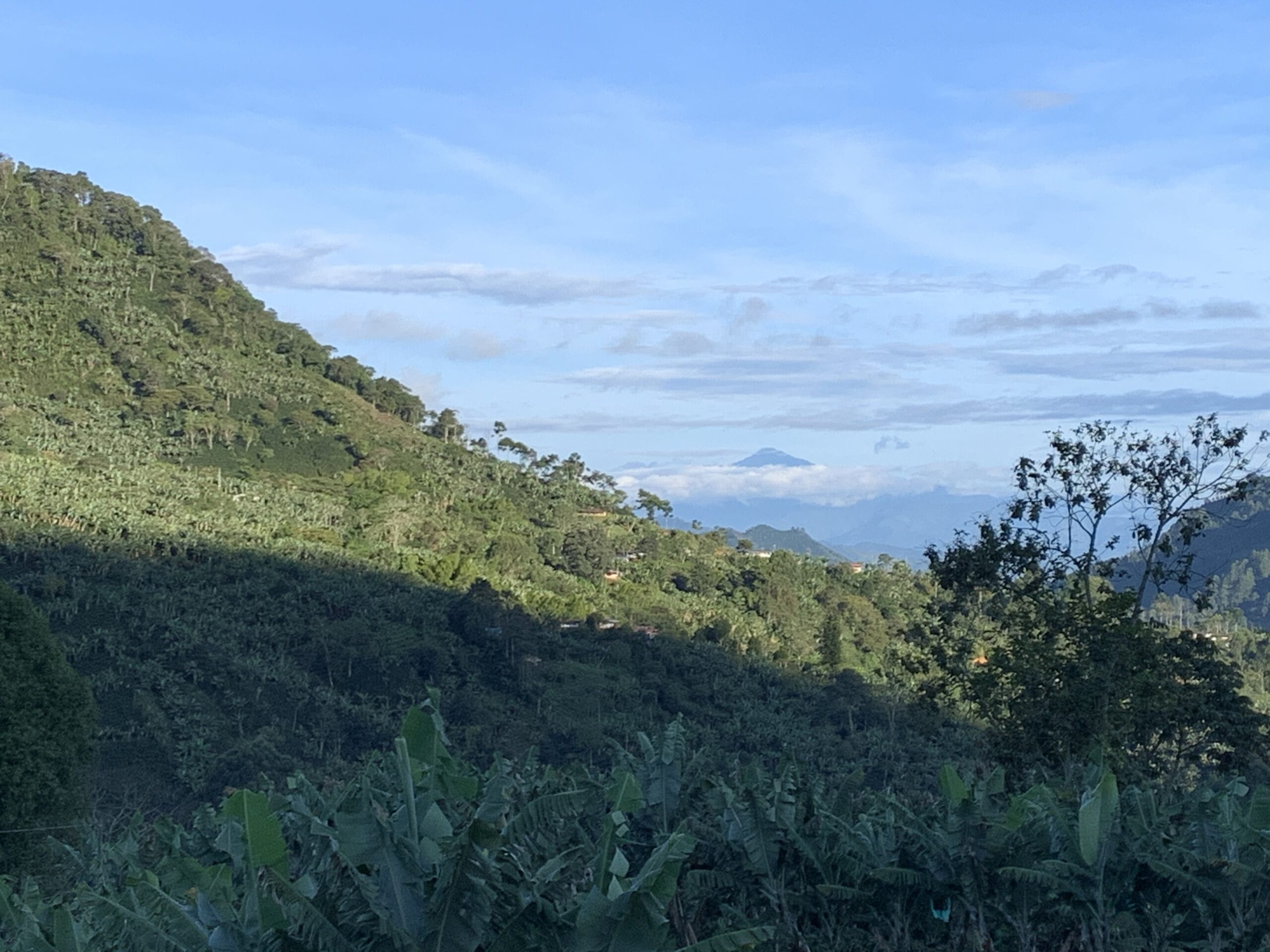 View across the coffee farm and nearby farms to Finca Mariposa