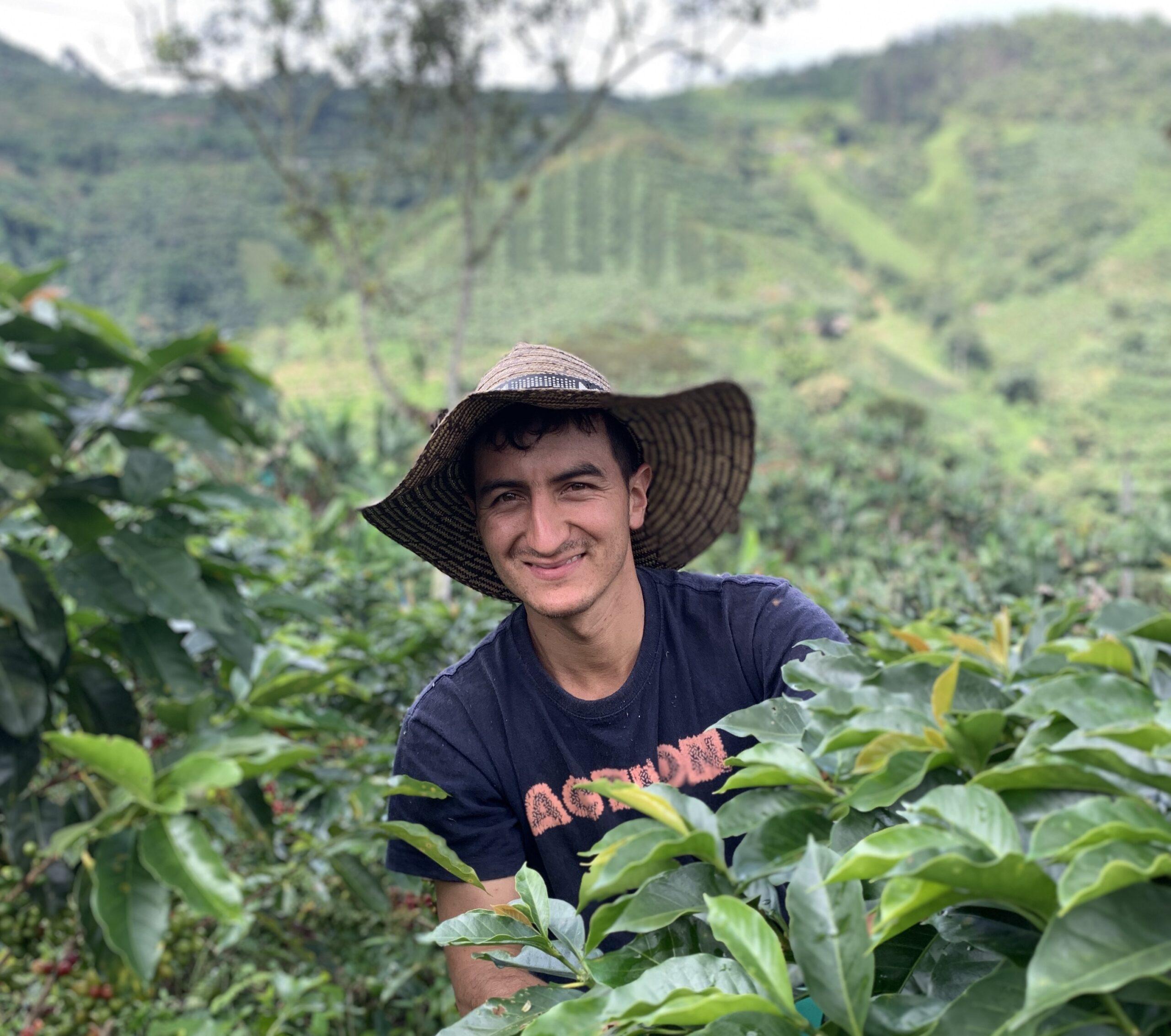 Coffee beans freshly picked