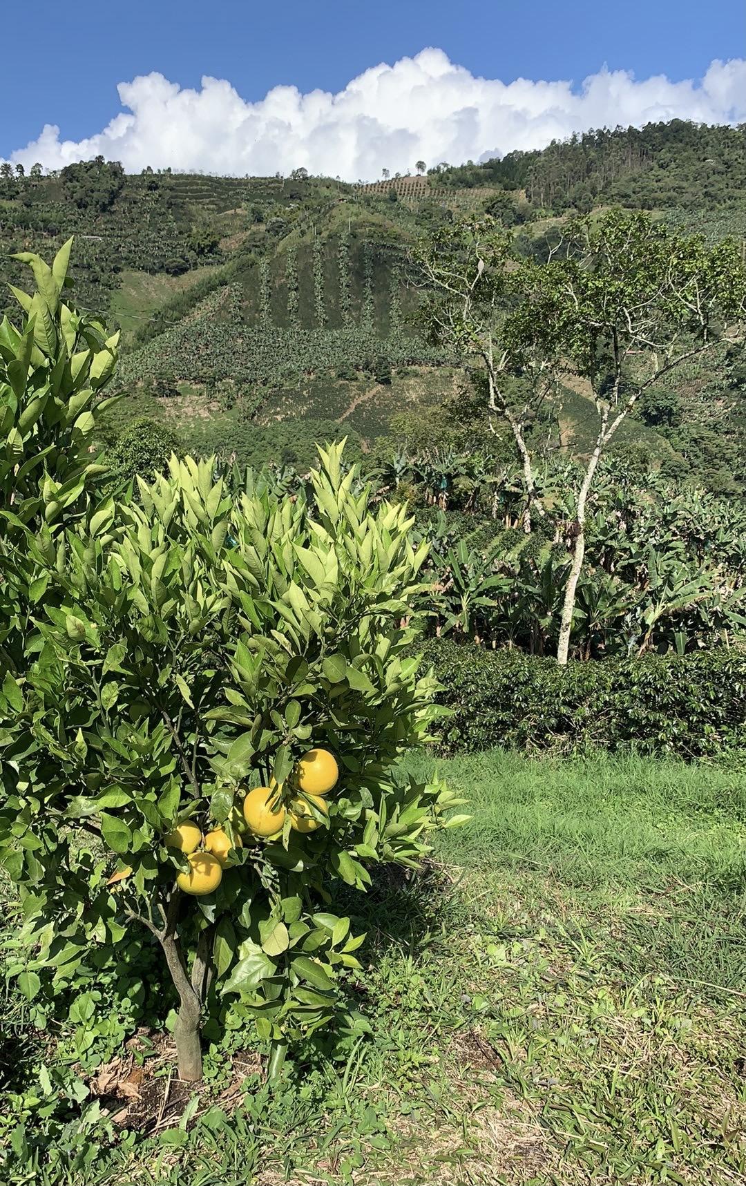 Finca Mariposa Jardin fruits