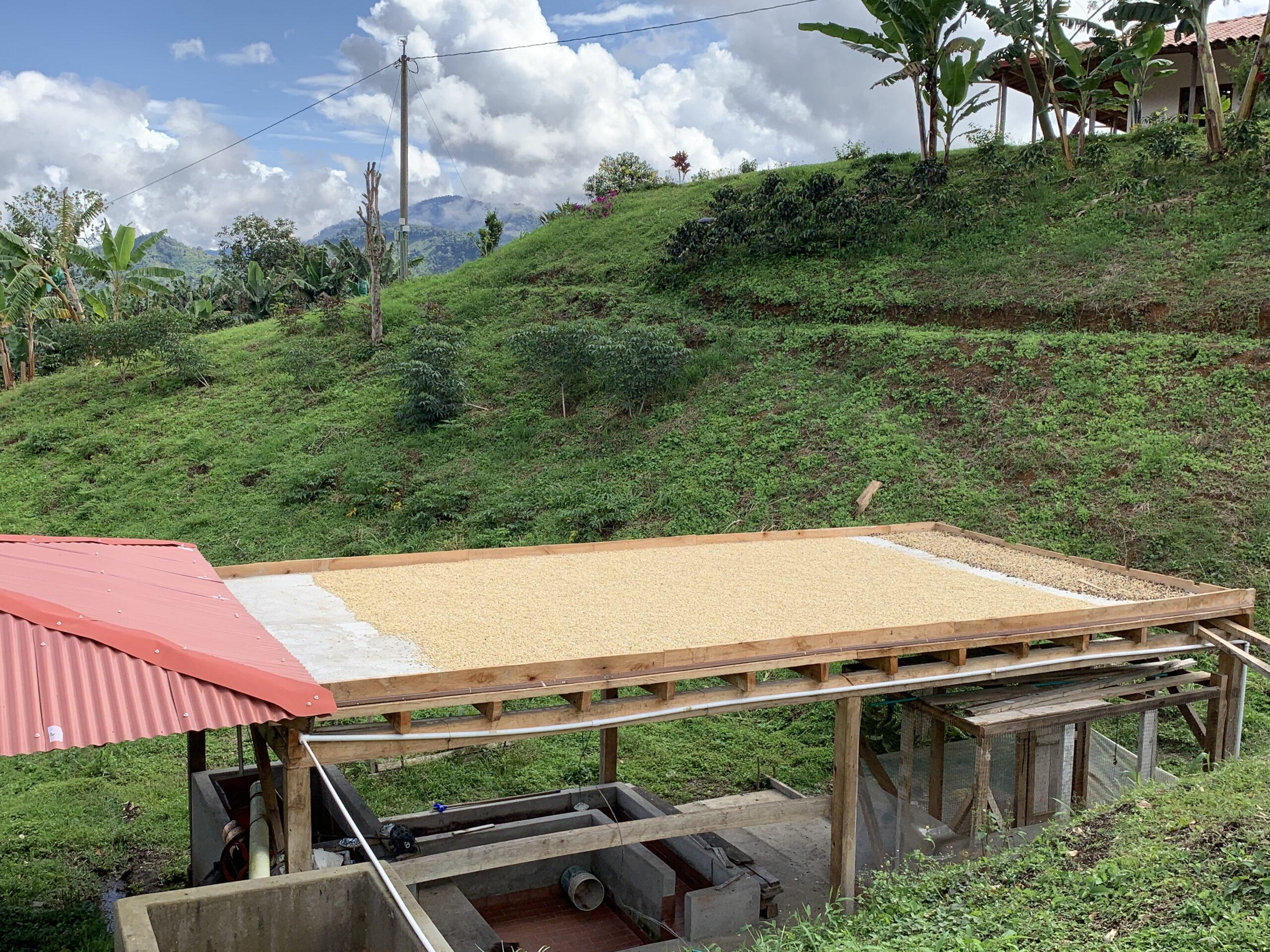 Farm to table coffee tour