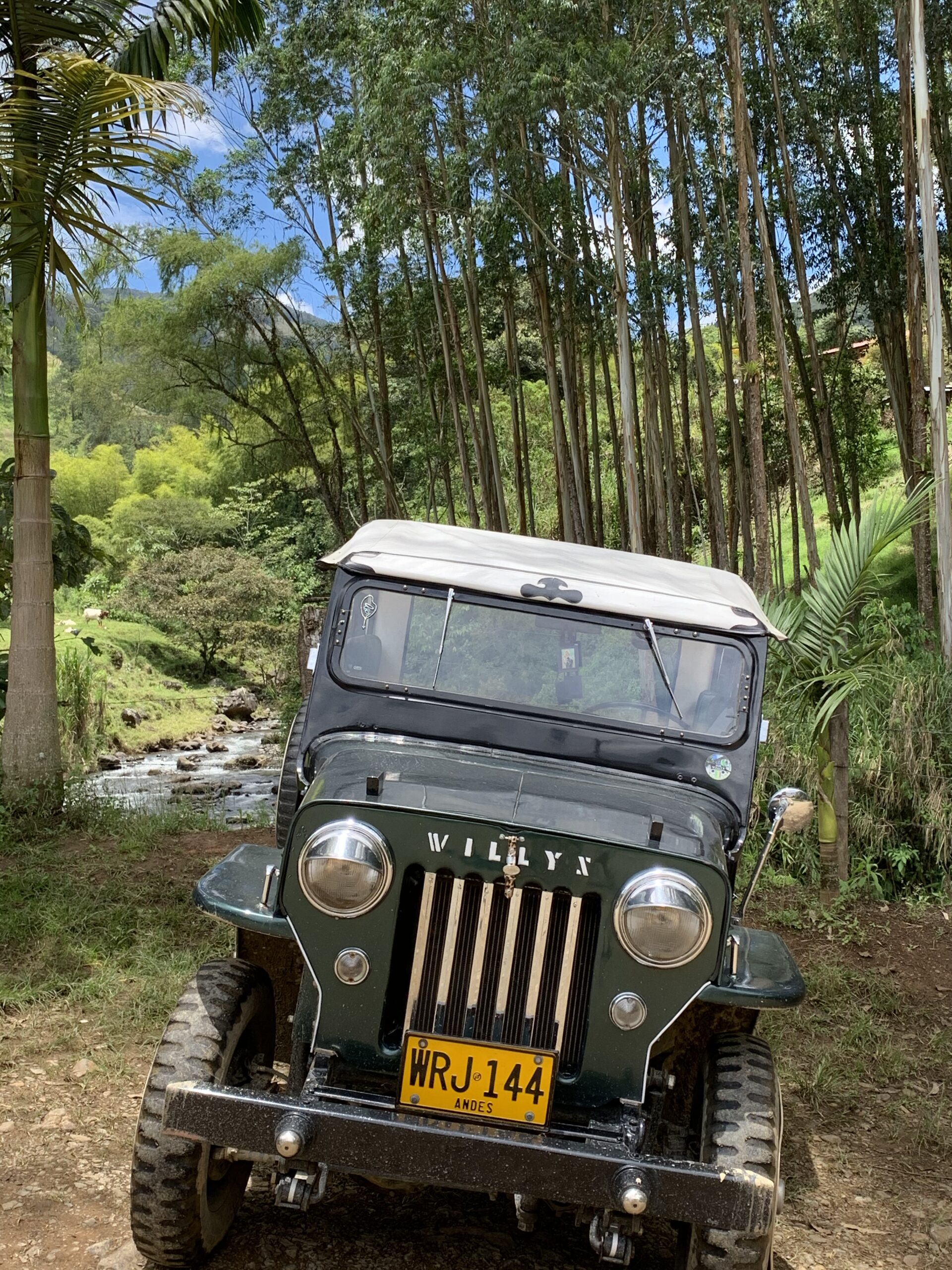 Discover Jardin in a 1954 Willys Jeep - fun adventure!