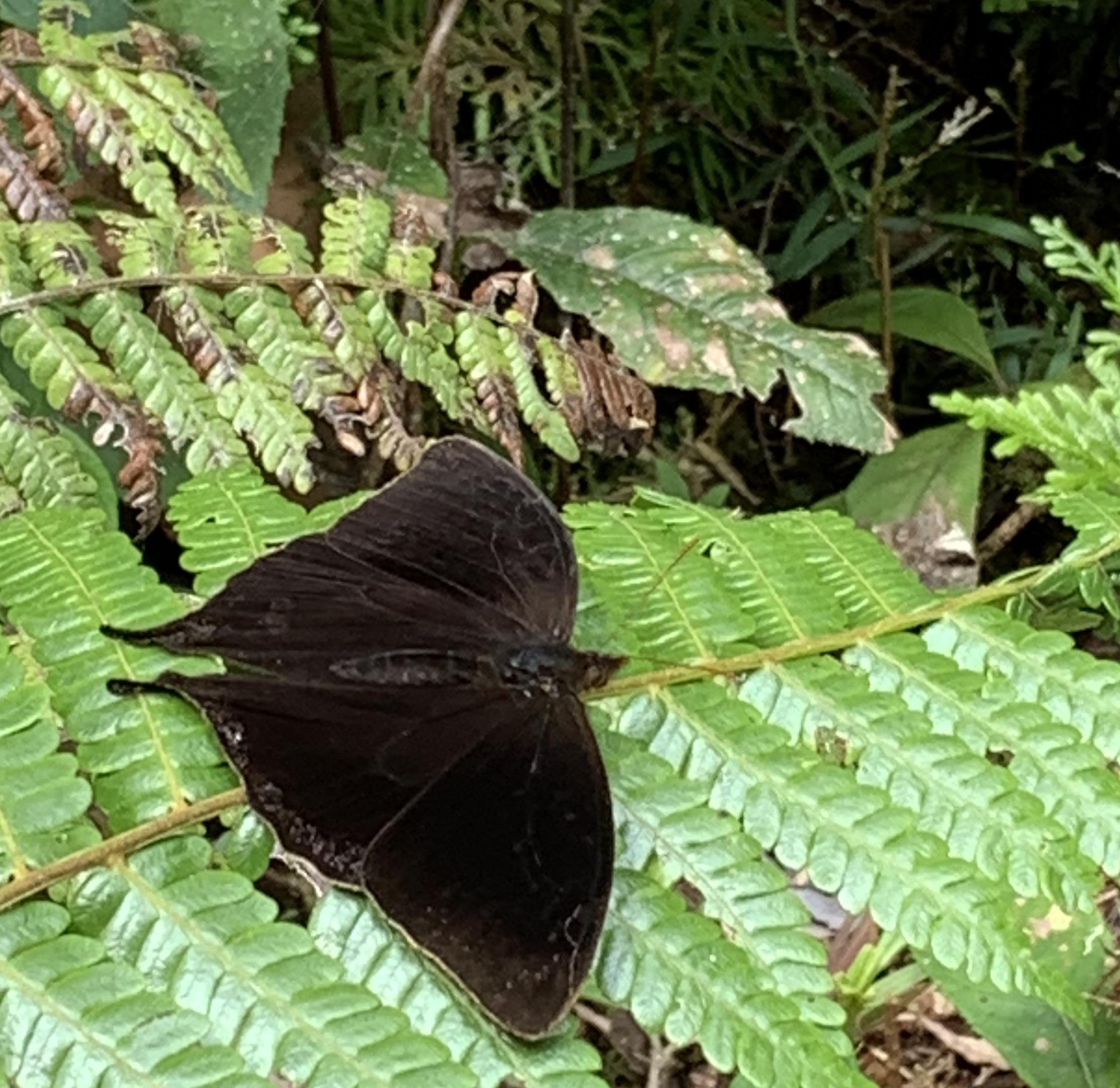 Butterflies in Jardin