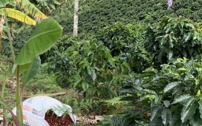 Farm to Table Coffee Production